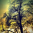 Tree Silhouette by EvelynR