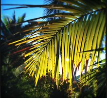 Sun Shines Through by Niki Smallwood