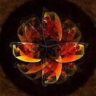 Sunglass mandala by Celeste Mookherjee