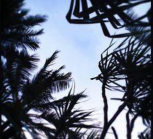 Windy Palms by Niki Smallwood