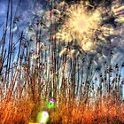 Tamar Island Grass by Marcus Salter