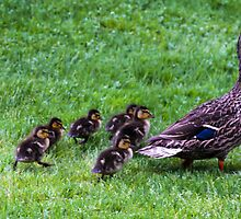 Follow the leader by PenguinPlot