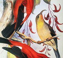 Vintage Native Hawaiian Birds by printscapes