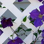 Purple on Lattice by Jane Jenkins