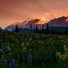 Sunbeam Meadow by DawsonImages