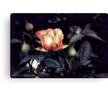 Rose From Darkness Canvas Print