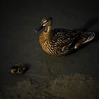 MAMA DUCK & CHICK  by scarletjames