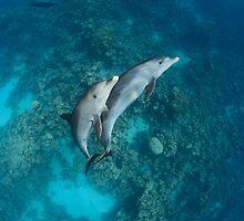 Sweet dolphin couple by Natalia Pryanishnikova