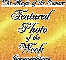 The Magic of the Camera weekly feature by LoneAngel