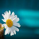 Daisy and Blue by KellyHeaton