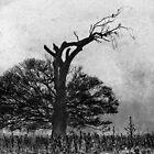Tree of Life by Su Walker
