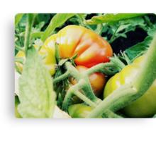 Garden Tomato Canvas Print