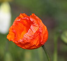 Crinkled Orange by GandK
