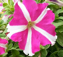 Amazing Flower Pink and White by Priyank