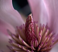 In The Pink by Ben Loveday