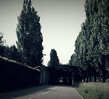 vintage, trees, Slovenia, hedge by dhanushka