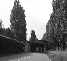 gray, trees, Slovenia, hedge by dhanushka