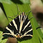 A Jersey Tiger Moth by Rivendell7