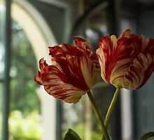 Of Tulips and Garden Windows by Georgia Mizuleva