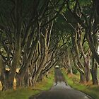 The Dark Hedges by Adrian McGlynn