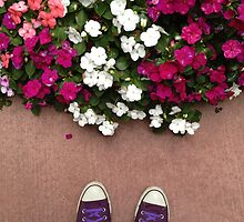Asphalt, Petals, Converse and Laces by lemonshell