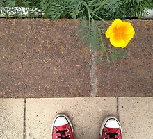 Asphalt, Petals, Converse and Laces 2 by lemonshell