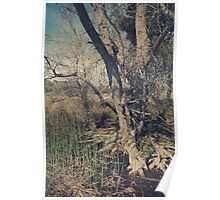 Deep Roots Poster
