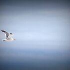 Seagull in Flight by Rochelle Smith
