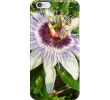 Passiflora Close Up With Garden Background iPhone Case/Skin
