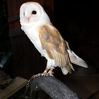 Barn Owl by Baron Guibal J P PhD Dip