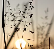 Sunset through the grass by AbigailJoy