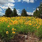 Wildflowers Junipers And Antlers by James Eddy