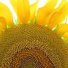 Long Beach, NY    Sunny Sunflower      4085 by KarenDinan