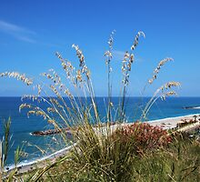 Overlooking the Beach and the Sea by hummingbirds