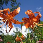 Spotted Lilies by DConsortium