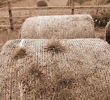 old round bales in Irish countryside by morrbyte