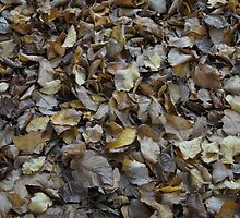Fallen Leaves by Steve9