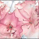 Softly Pink by Helenvandy