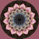 Kaleidoscope Card by Jan  Tribe
