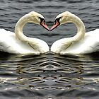 Mute Swan Heart by Avril Harris