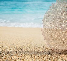 Coral element in the sand by printscapes