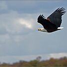 Fish Eagle by CraigSev