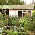 Lost Garden by salodelyma