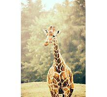 Giraffe Portrait Photographic Print