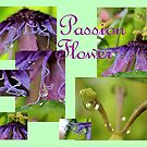 Passion Flower Collage by aprilann