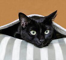 Suki, 007 Undercover Cat! by heatherfriedman