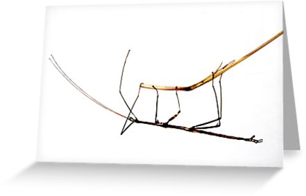 Walking Stick by Laurie Minor