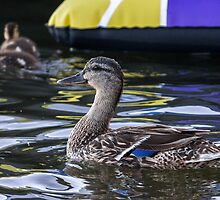 Fine Feathered Mother Duck by Mikell Herrick