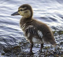Wee Wet One by Mikell Herrick