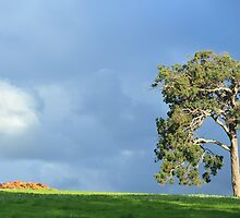 big old gum tree by metriognome